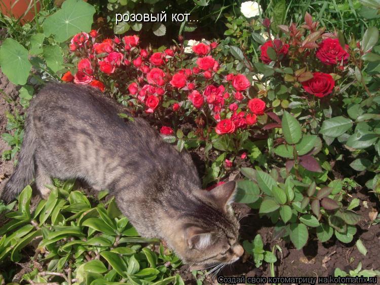 Котоматрица: розовый кот...
