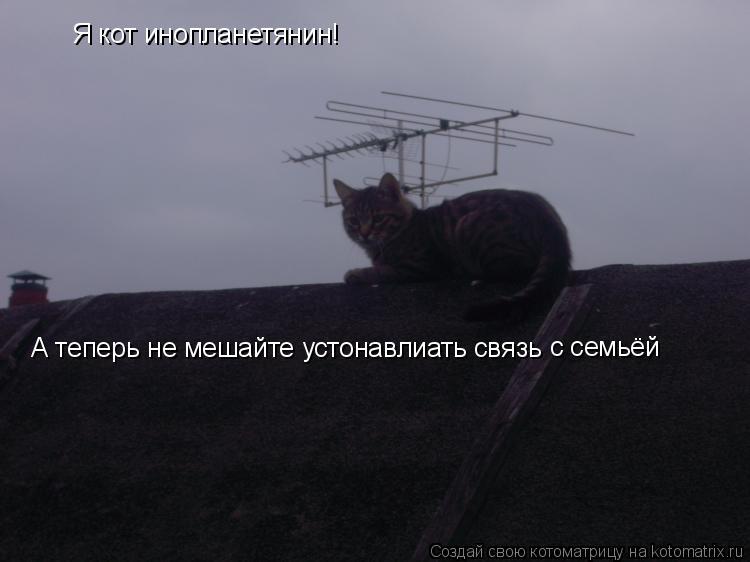 Котоматрица: Я кот инопланетянин! А теперь не мешайте устонавлиать связь с семьёй