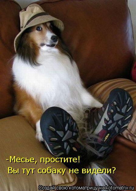 Котоматрица: -Месье, простите! Вы тут собаку не видели?
