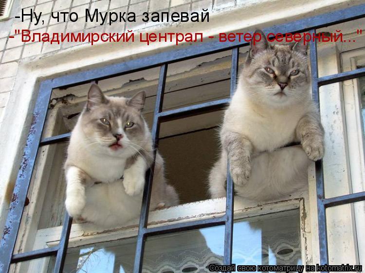 """Котоматрица: -Ну, что Мурка запевай   -""""Владимирский централ - ветер северный..."""""""