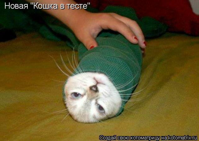 """Котоматрица: Новая """"Кошка в тесте"""""""