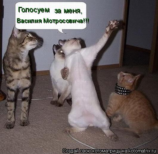 Котоматрица: Голосуем за меня, Василия Мотросовича!!!