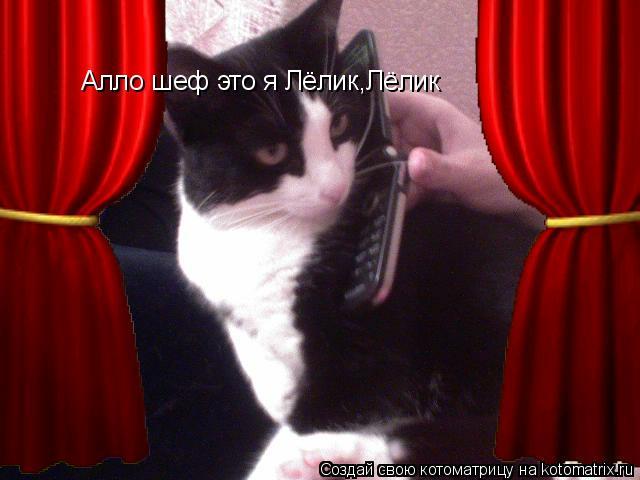 Котоматрица: Алло шеф это я Лёлик,Лёлик