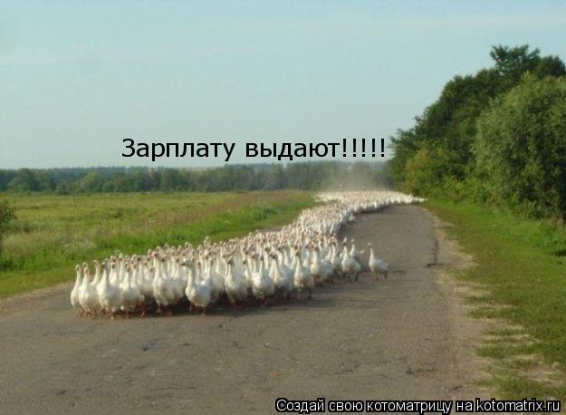 Котоматрица: Зарплату выдают!!!!!