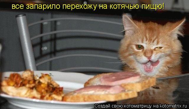 Котоматрица: все запарило перехожу на котячью пищю!