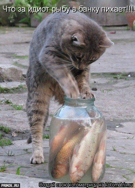 Котоматрица: Что за идиот рыбу в банку пихает!!!!