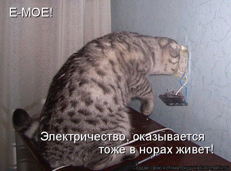 Котоматрица: Е-МОЕ! Электричество, оказывается тоже в норах живет!