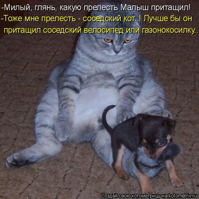 Котоматрица: -Милый, глянь, какую прелесть Малыш притащил! -Тоже мне прелесть - соседский кот..! Лучше бы он притащил соседский велосипед или газонокосилк