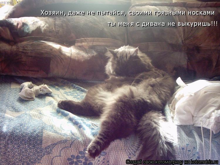 Котоматрица: Хозяин, даже не пытайся, своими грязными носками   ты меня с дивана не выкуришь!!!