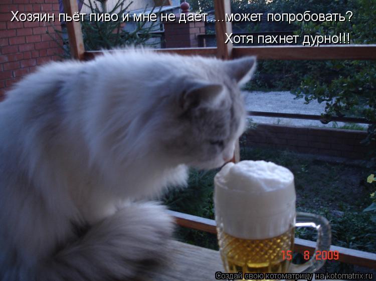 Котоматрица: Хозяин пьёт пиво и мне не даёт.....может попробовать? Хотя пахнет дурно!!!