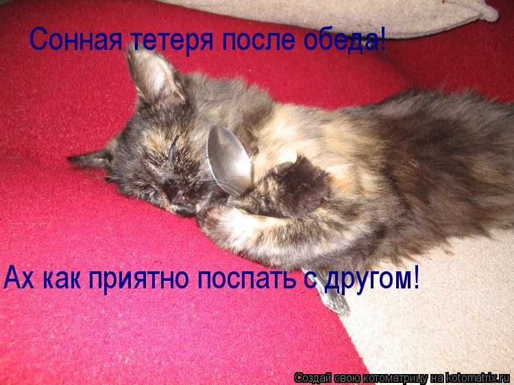 Котоматрица: Сонная тетеря после обеда! Ах как приятно поспать с другом!