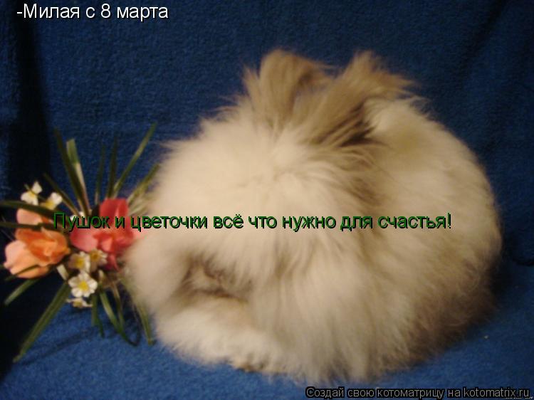 Котоматрица: _Милая с 8 марта -Милая с 8 марта Пушок и цветочки всё что нужно для счастья!