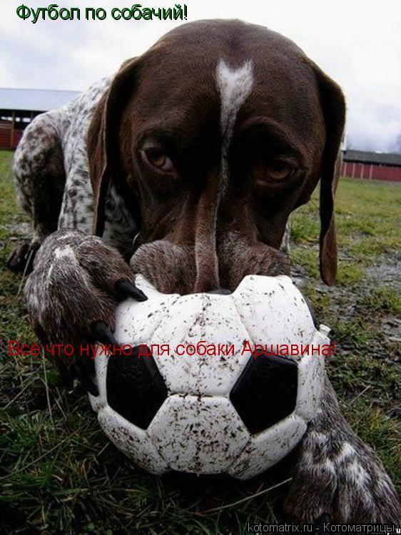 Котоматрица: Футбол по собачий! Всё что нужно для собаки Аршавина!