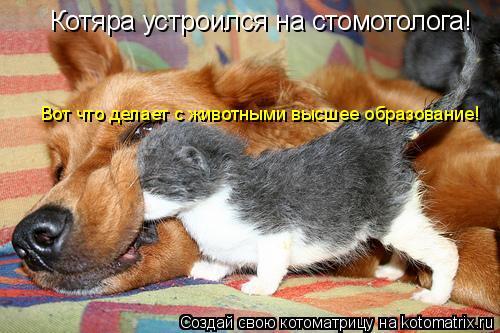 Котоматрица: Котяра устроился на стомотолога! Вот что делает с животными высшее образование!