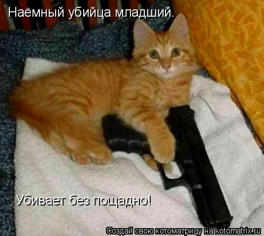 Котоматрица: Наёмный убийца младший. Убивает без пощадно!