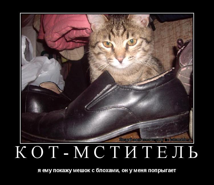 Котоматрица: кот-мститель я ему покажу мешок с блохами, он у меня попрыгает