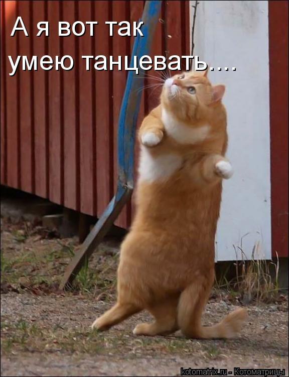 Котоматрица: А я вот так  умею танцевать....