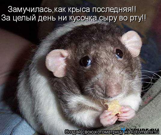 Котоматрица: Замучилась,как крыса последняя!! За целый день ни кусочка сыру во рту!!