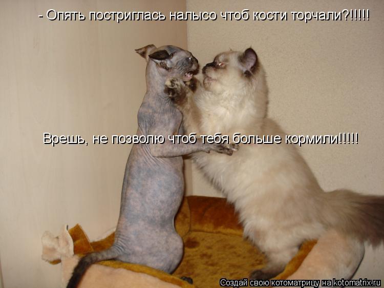 Котоматрица: - Опять постриглась налысо чтоб кости торчали?!!!!!  Врешь, не позволю чтоб тебя больше кормили!!!!!