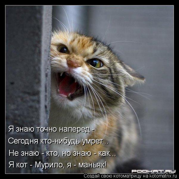 Котоматрица: Я кот - Мурило, я - маньяк! Не знаю - кто, но знаю - как... Сегодня кто-нибудь умрет... Я знаю точно наперед -