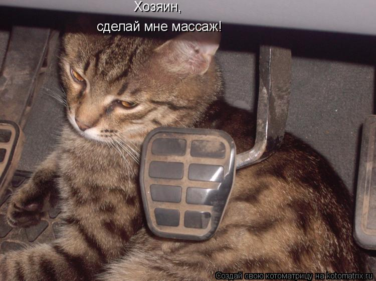 Котоматрица: Хозяин, сделай мне массаж!