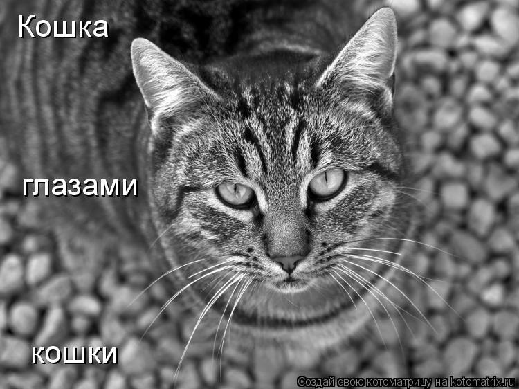 Котоматрица: Кошка глазами кошки