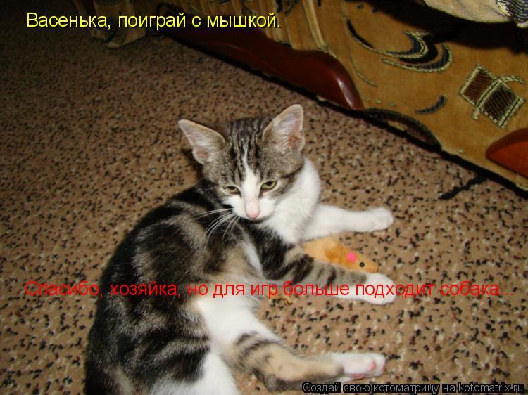 Котоматрица: Васенька, поиграй с мышкой. Спасибо, хозяйка, но для игр больше подходит собака...