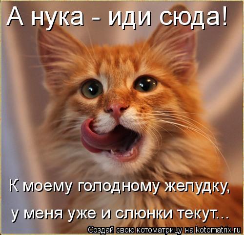 Котоматрица: А нука - иди сюда!  К моему голодному желудку, у меня уже и слюнки текут...