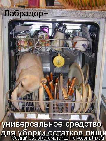 Котоматрица: Лабрадор+ универсальное средство для уборки остатков пищи