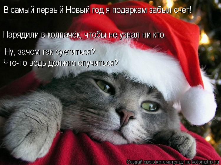 Котоматрица: В самый первый Новый год я подаркам забыл счёт! Нарядили в колпачёк, чтобы не узнал ни кто. Ну, зачем так суетиться? Что-то ведь должно случит