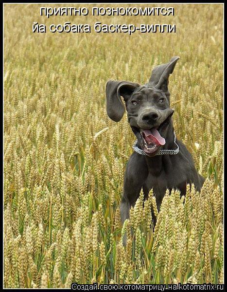 Котоматрица: приятно познокомится  йа собака баскер-вилли