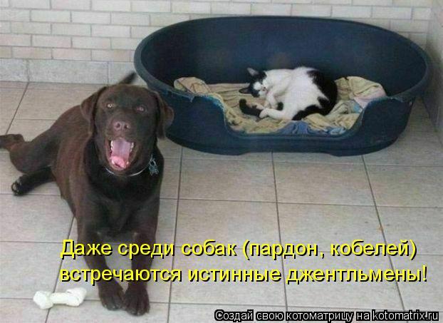 Котоматрица: Даже среди собак (пардон, кобелей) встречаются истинные джентльмены!