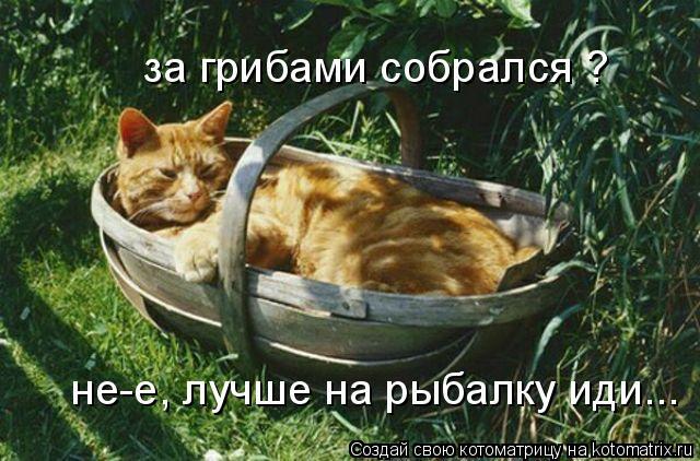 Котоматрица: за грибами собрался ? не-е, лучше на рыбалку иди, не-е, лучше на рыбалку иди...