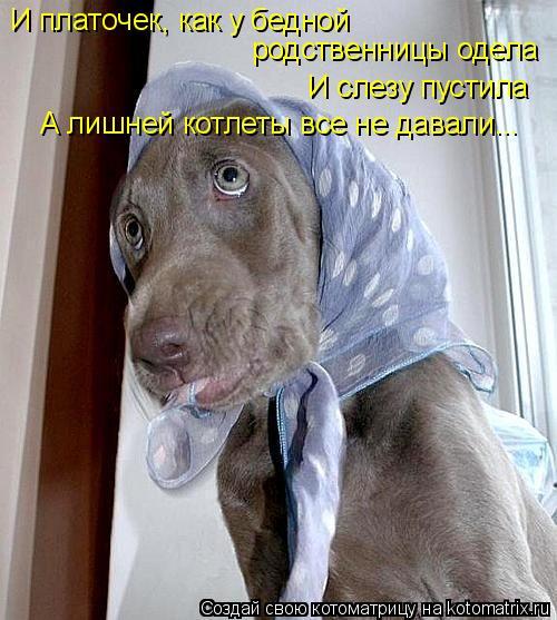Котоматрица: И платочек, как у бедной  родственницы одела И слезу пустила А лишней котлеты все не давали...
