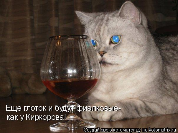 Котоматрица: Еще глоток и будут фиалковые-  как у Киркорова!