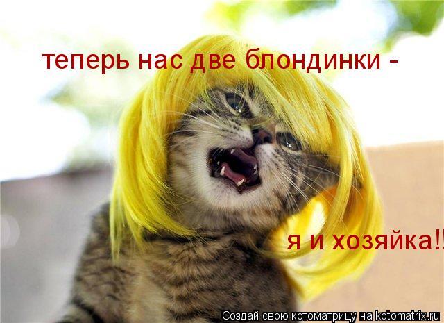 Котоматрица: теперь нас две блондинки -  я и хозяйка!!