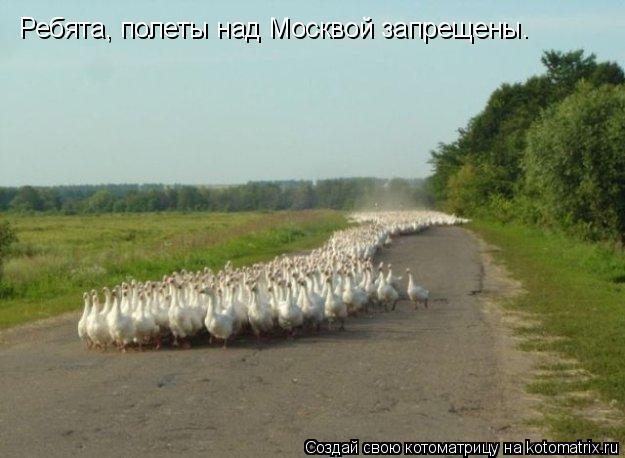 Котоматрица: Ребята, полеты над Москвой запрещены.