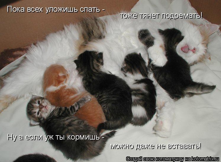 Котоматрица: Пока всех уложишь спать -  тоже тянет подремать! Ну а если уж ты кормишь -  можно даже не вставать!