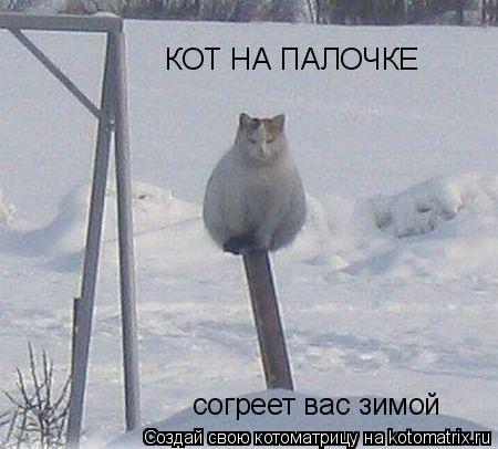 Котоматрица: КОТ НА ПАЛОЧКЕ согреет вас зимой