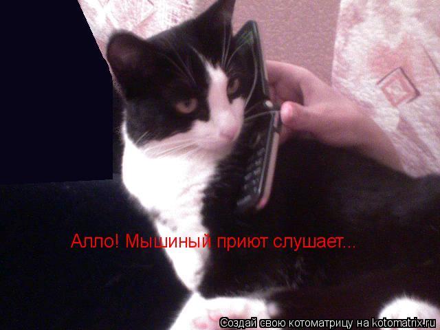 Котоматрица: Алло! Мышиный приют слушает...