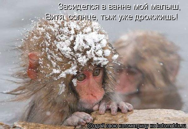 Котоматрица: Засиделся в ванне мой малыш, Витя, солнце, тыж уже дрожжишь!