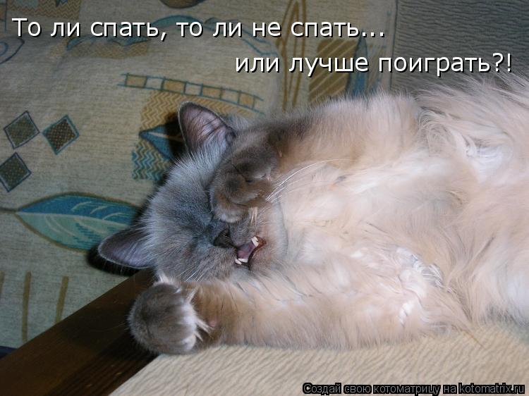 Котоматрица: То ли спать, то ли не спать... или лучше поиграть?!