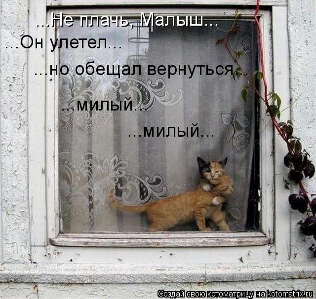Котоматрица: ...Он улетел... ...но обещал вернуться... ...милый... ...милый... ...Не плачь, Малыш...