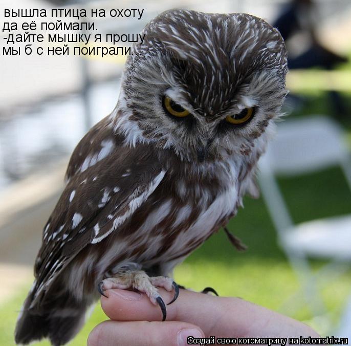 Котоматрица: вышла птица на охоту да её поймали. -дайте мышку я прошу мы б с ней поиграли...