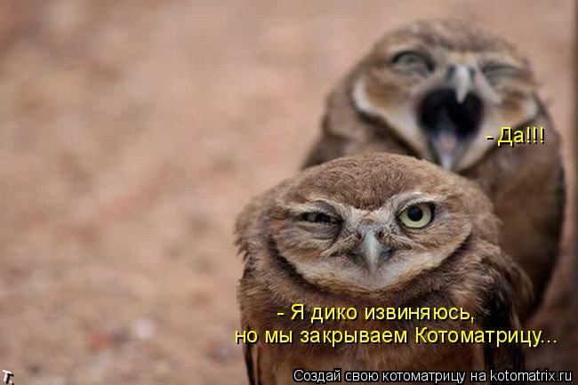 Котоматрица: - Я дико извиняюсь,  но мы закрываем Котоматрицу... - Да!!!