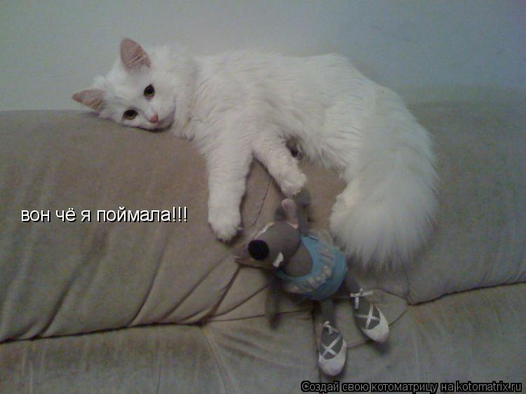 Котоматрица: вон чё я поймала!!!
