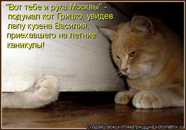 """Котоматрица: """"Вот тебе и рука Москвы"""" - подумал кот Грицко, увидев лапу кузена Василия, приехавшего на летние  каникулы!"""
