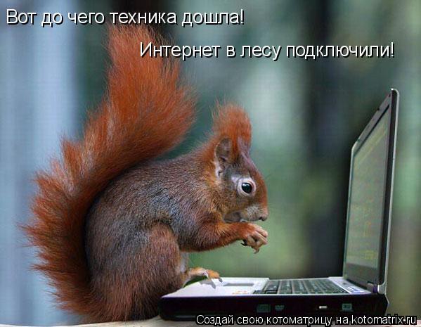 Котоматрица: Вот до чего техника дошла! Интернет в лесу подключили!