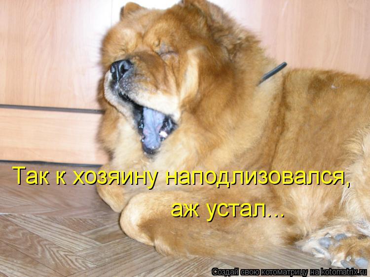 Котоматрица: Так к хозяину наподлизовался, аж устал...