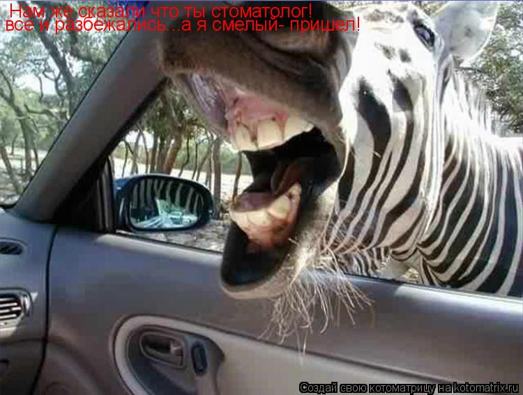 Котоматрица: Нам же сказали что ты стоматолог!  все и разбежались...а я смелый- пришел!